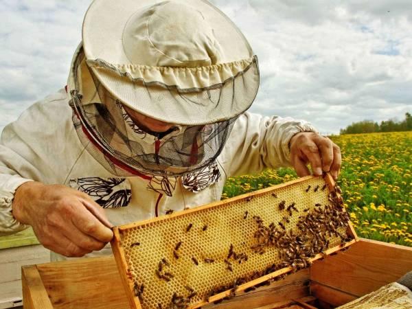 Beekeeper inspect bee hive